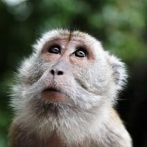 【2016年はサル年】英語イディオムに見る西欧の「猿」のイメージ