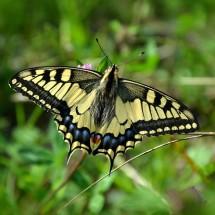 英語フレーズで意外な使われ方をする「蝶」(チョウ)