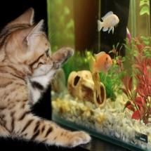 魚の話はホラ話。魚(fish)を用いた英語フレーズ8選