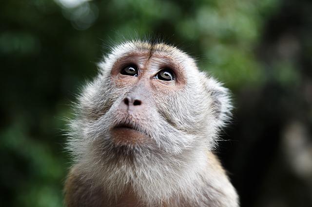 monkey-447106_640