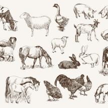 英語の「動物が登場する」イディオム・慣用表現集