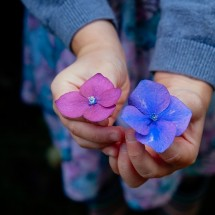 英語で表現する「紫色」、purpleやvioletその他の表現の違い