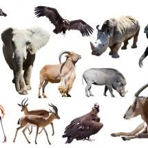 英語の「動物名に由来する形容詞」と「比喩としての動物名」