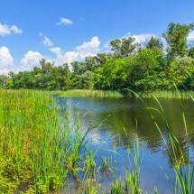 「池の水」「膝の水」「水を抜く」は英語でどう言う?